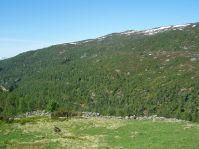 Tuftahaug inn Njøsadalen 063