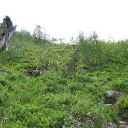 Henjadalen-Friksdal-005