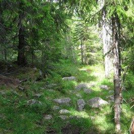 Henjadalen-Nyastøl-004