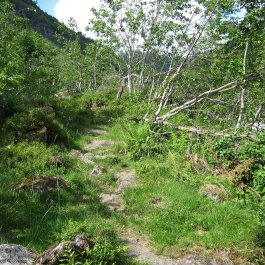 Henjadalen-Nyastøl-017