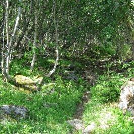 Henjadalen-Nyastøl-020