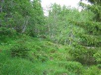 Henjadalen-Nyastøl-028