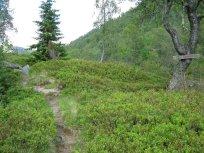 Henjadalen-Nyastøl-034