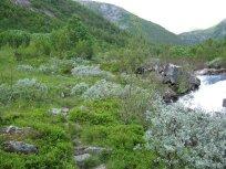Henjadalen-Nyastøl-039