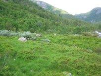 Henjadalen-Nyastøl-040