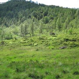 Henjadalen-Nyastøl-053