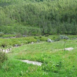 Henjadalen-Nyastøl-057
