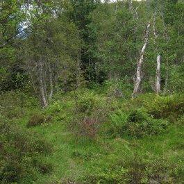 Henjadalen-Åsenosi-019