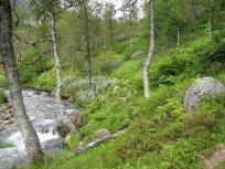 Henjadalen-Åsenosi-026