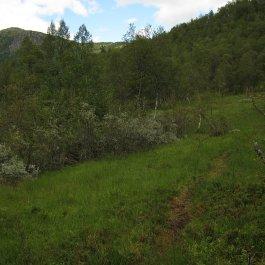 Henjadalen-Åsenosi-027
