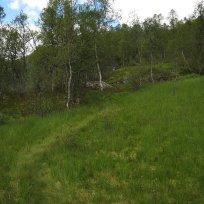 Henjadalen-Åsenosi-029