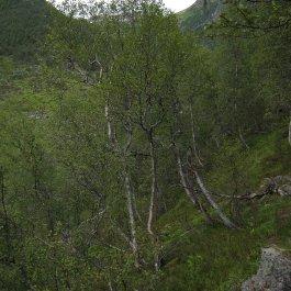 Henjadalen-Åsenosi-032