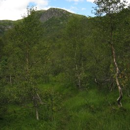 Henjadalen-Åsenosi-040