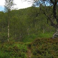 Henjadalen-Åsenosi-042
