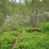 Henjadalen-Åsenosi-044