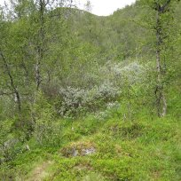 Henjadalen-Åsenosi-048