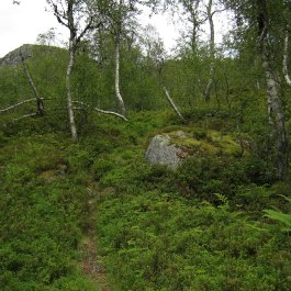 Henjadalen-Åsenosi-051