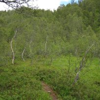 Henjadalen-Åsenosi-052