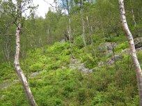 Henjadalen-Åsenosi-053