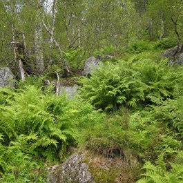 Henjadalen-Åsenosi-054