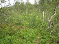 Henjadalen-Åsenosi-056