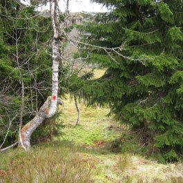 Hottadalen via Skagasete 028