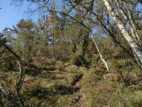 Utsiktspunkt nær Kyrafossen 004