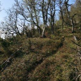 Utsiktspunkt nær Kyrafossen 008