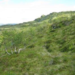 Bergsete frå Njøs 031