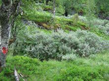Bergsete opp Kvannskar-001