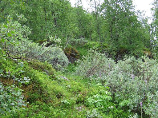 Bergsete opp Kvannskar-002