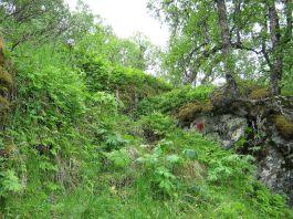 Bergsete opp Kvannskar-003
