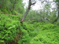 Bergsete opp Kvannskar-004