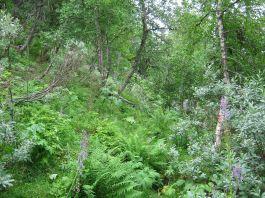 Bergsete opp Kvannskar-006