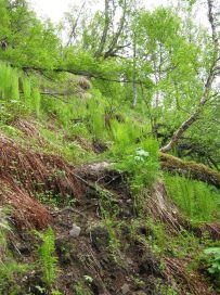Bergsete opp Kvannskar-011