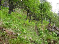 Bergsete opp Kvannskar-012