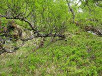 Bergsete opp Kvannskar-015