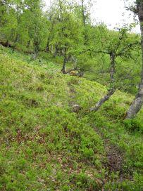 Bergsete opp Kvannskar-016