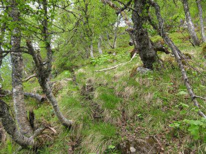 Bergsete opp Kvannskar-017