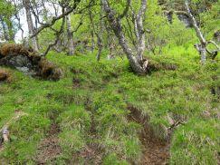 Bergsete opp Kvannskar-018