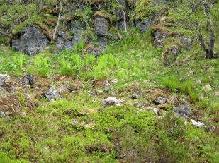 Bergsete opp Kvannskar-020