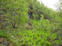 Bergsete opp Kvannaskard-021