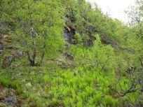 Bergsete opp Kvannskar-021