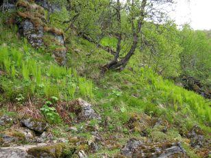 Bergsete opp Kvannskar-022
