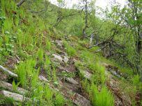 Bergsete opp Kvannskar-023