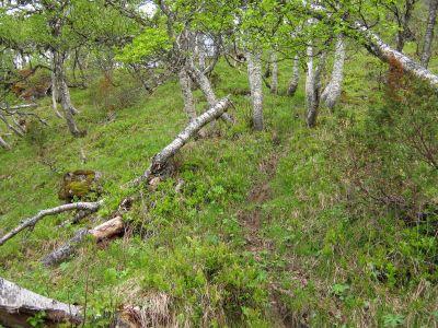 Bergsete opp Kvannskar-027