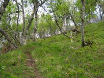 Bergsete opp Kvannskar-028