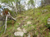 Bergsete opp Kvannskar-032