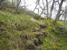 Bergsete opp Kvannskar-034