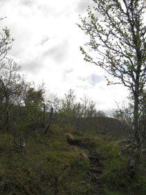 Bergsete opp Kvannskar-036